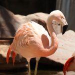 pink-flamingo-habitat-las-vegas