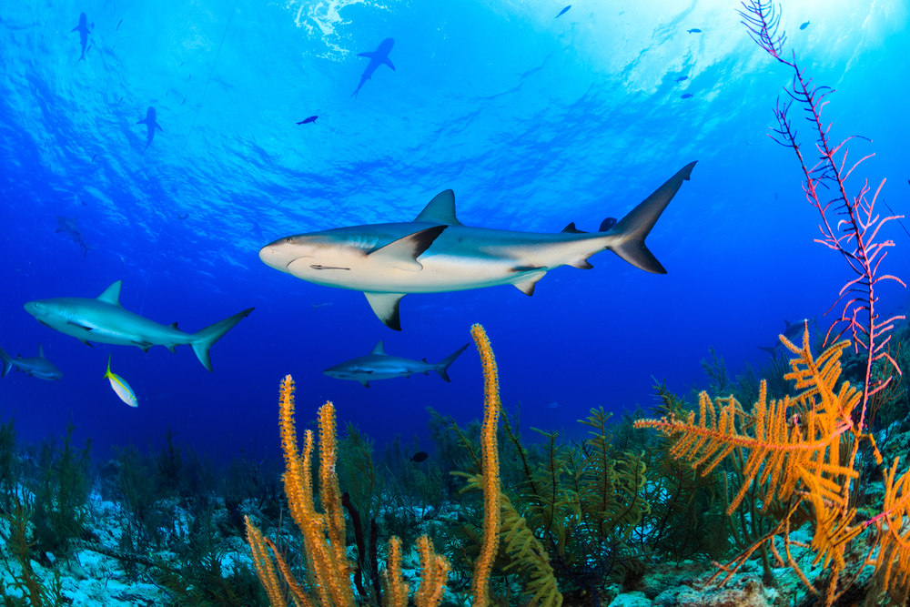 View of sharks from below.