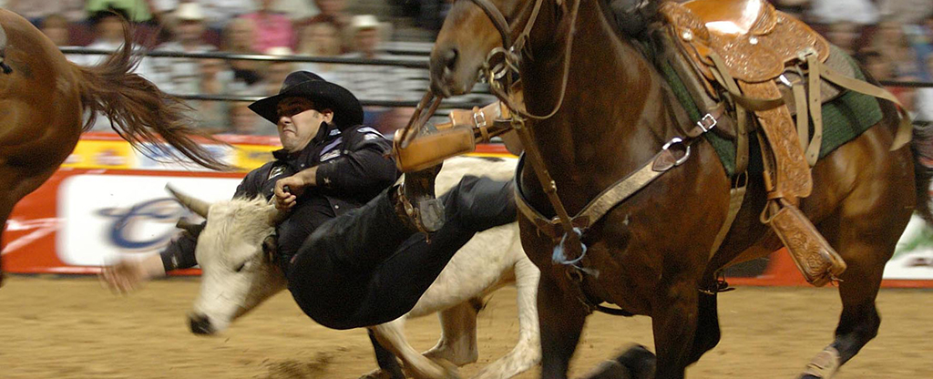 Contestant at the NFR catching a bull.
