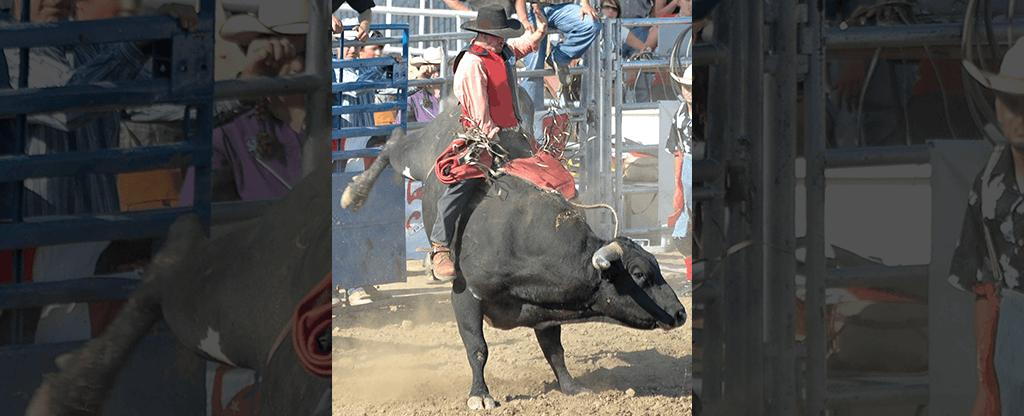 Cowboy riding a bull at the rodeo.